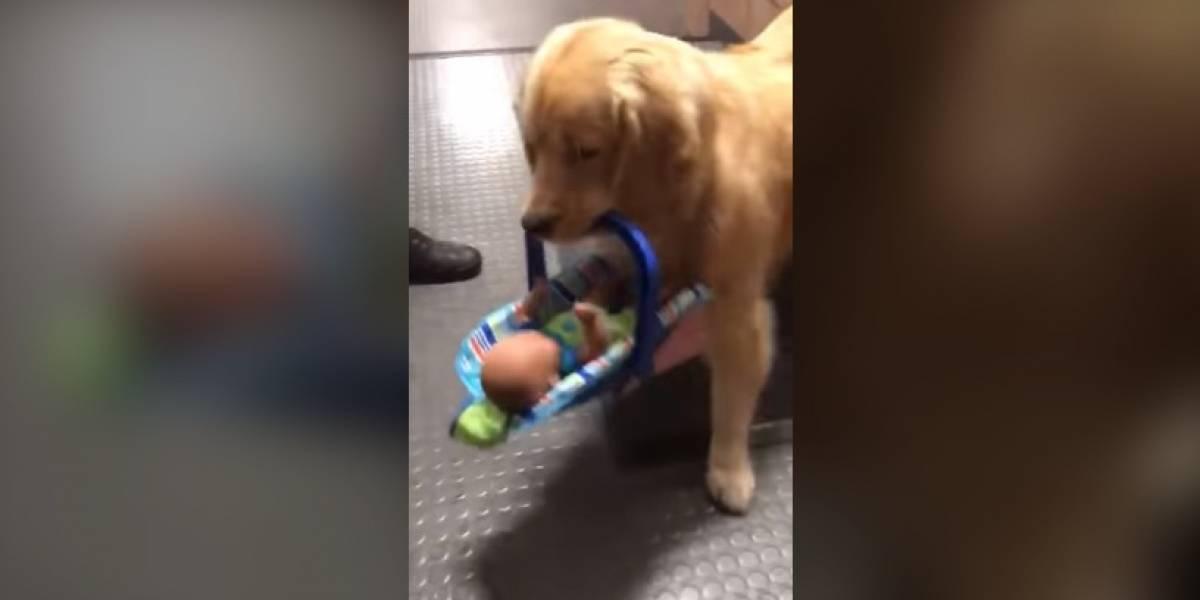 VÍDEO: Polícia descobre cachorro roubando brinquedos doados para campanha de Natal