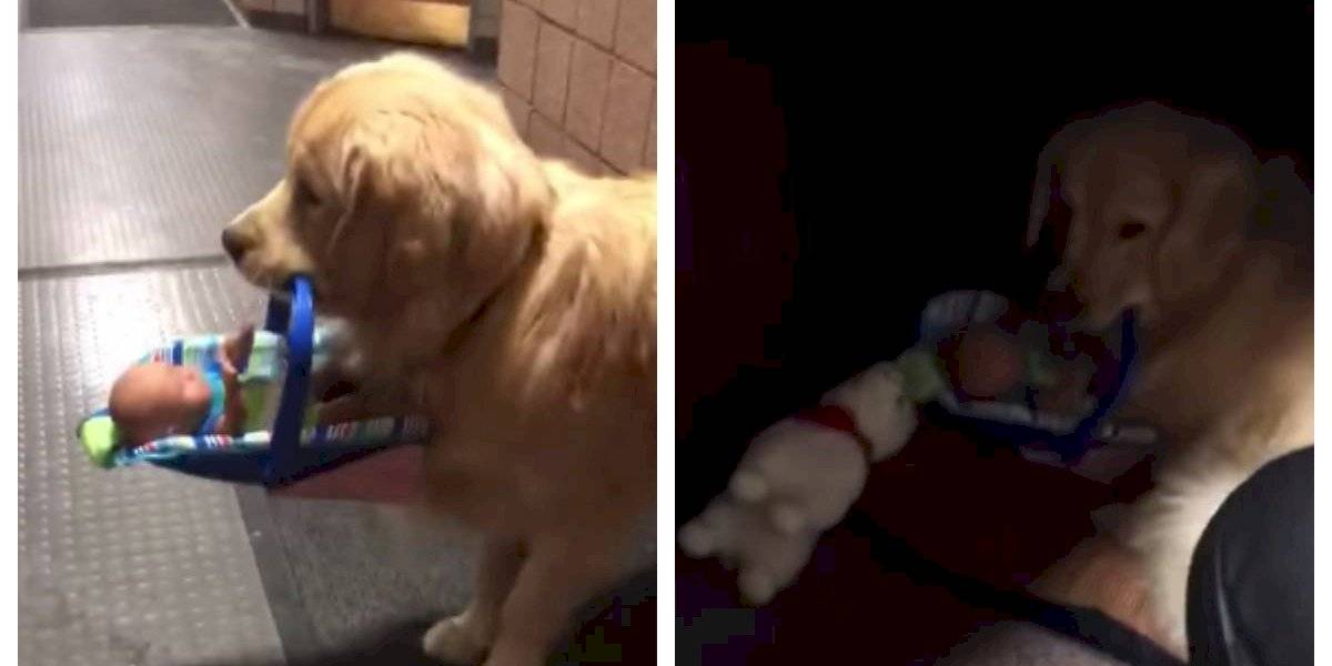 """Perro policía captado mientras """"robaba"""" juguetes donados para Navidad"""
