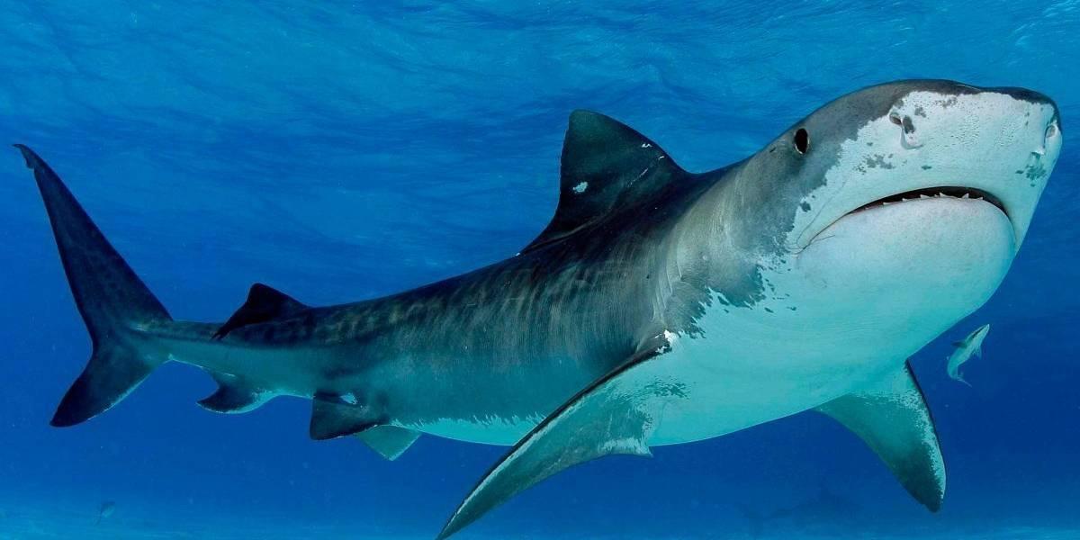 Gobierno modifica polémica resolución que autoriza la pesca de tiburones