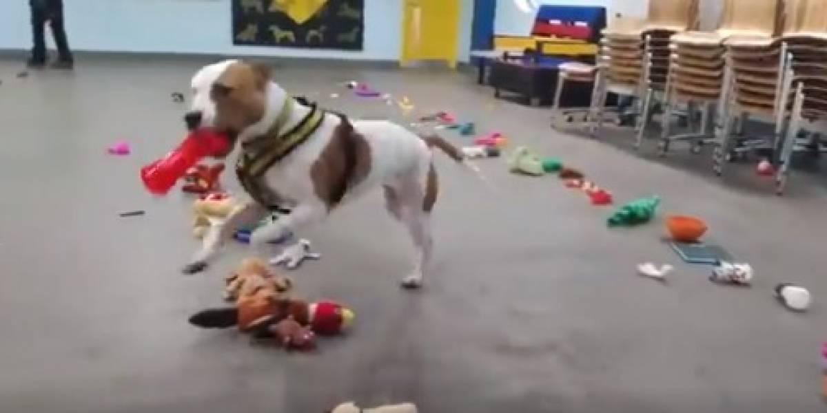 Vídeo viral mostra felicidade de cachorros de abrigo que podem escolher seu presente de Natal