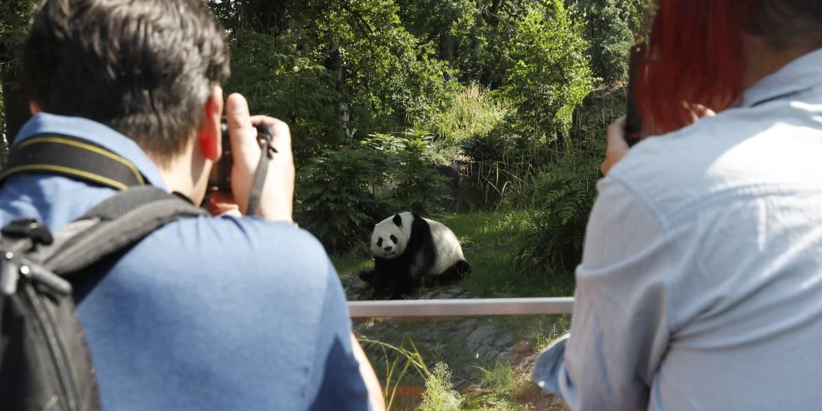 Cerca de 22 mil personas compran un zoológico para liberar a sus animales
