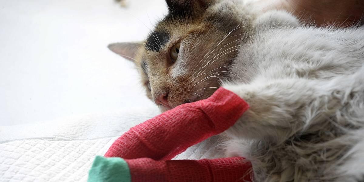 Por los incendios de Valparaíso: Habilitan centro de atención primaria para animales heridos