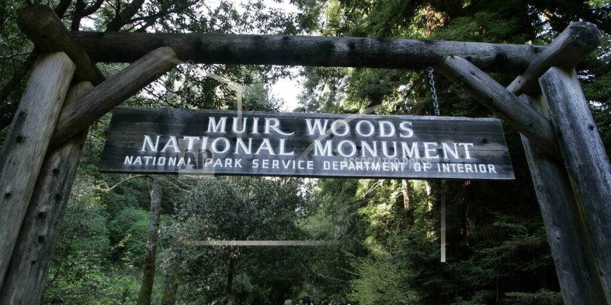 Hombre muere aplastado por enorme árbol en California