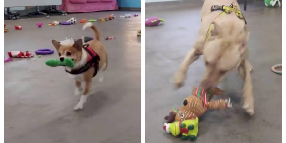"""""""Esto hizo feliz a mi corazón"""": perros se vuelven """"locos"""" de alegría al elegir su juguete preferido como regalo de Navidad"""