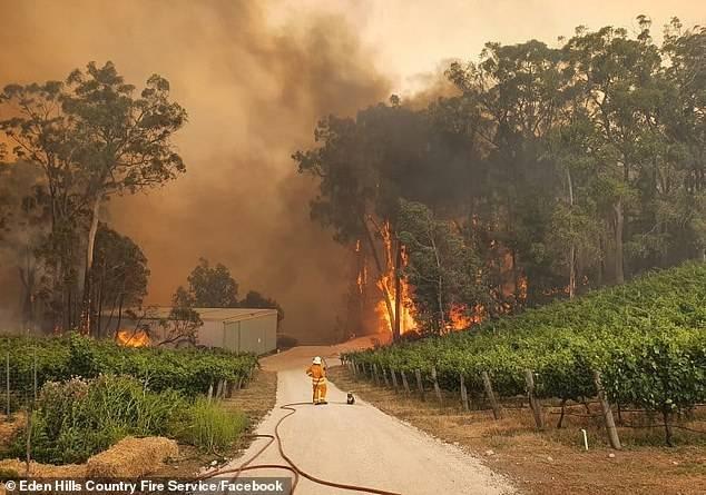 Chilenos en Australia relatan la experiencia de haber vivido los incendios forestales