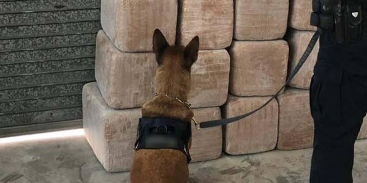 Guardia Nacional decomisa 382 kilos de marihuana en CDMX