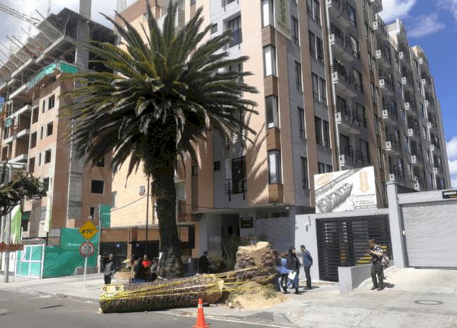 Constructora en el norte de Bogotá taló palma centenaria que impedía acceso a garajes