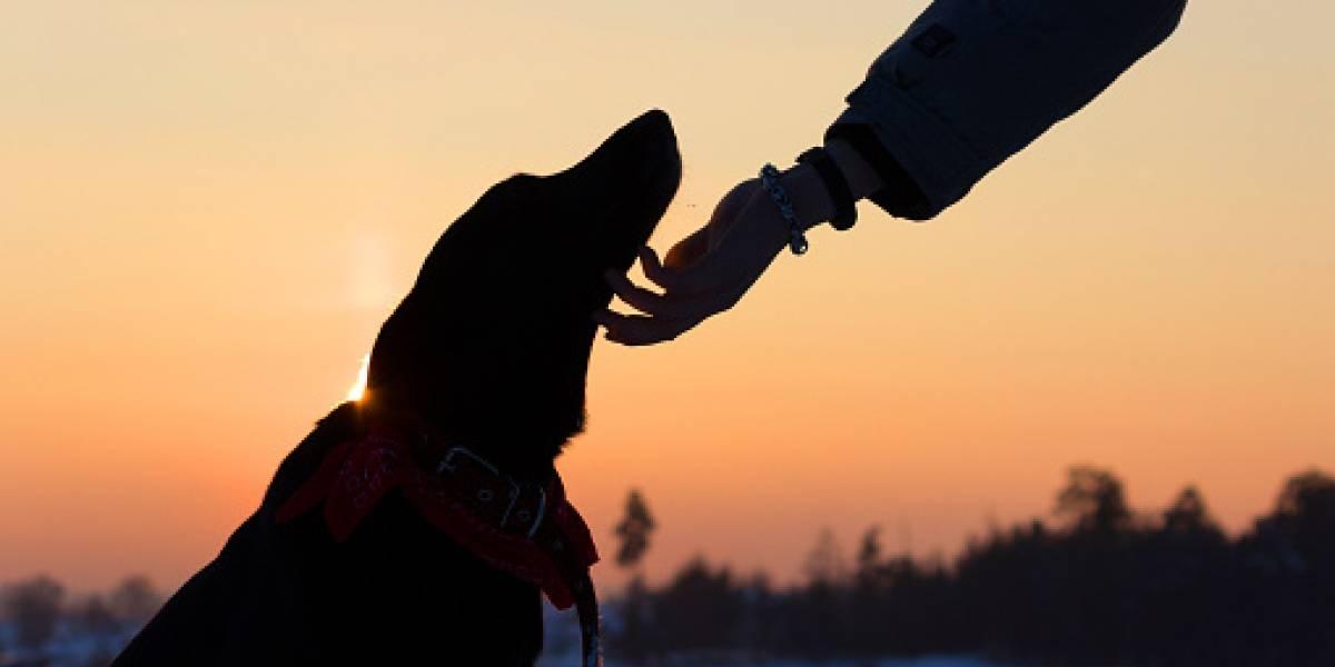 Hoy se celebra el día internacional del perro