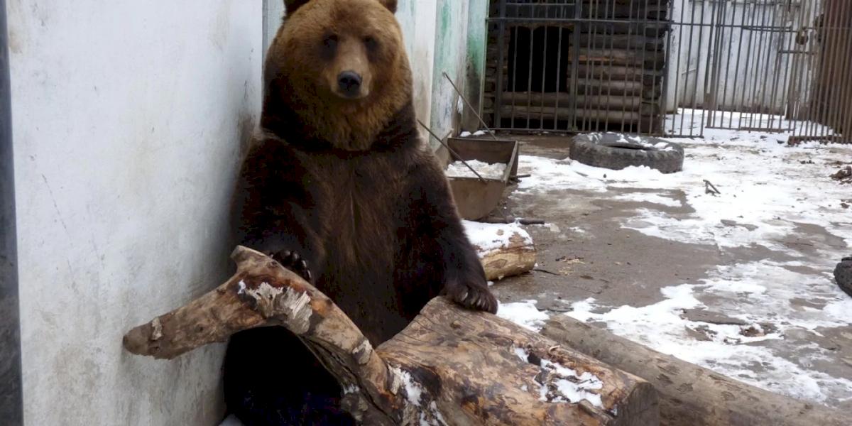 Clima: Rússia vive inverno sem neve no ano mais quente já registrado