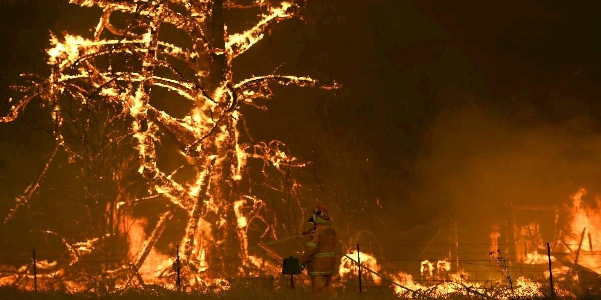 Un escenario devastador: cerca de 480 millones de animales habrían muerto en los incendios en Australia