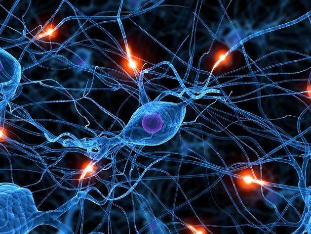 Ciencia neuronas
