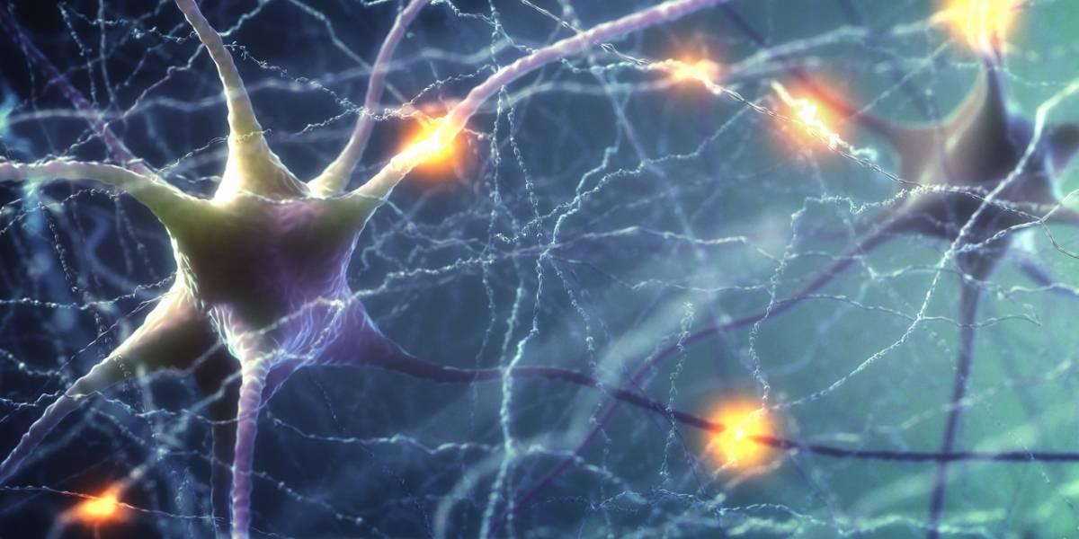 Ciencia: Un video nos muestra cómo mueren las neuronas