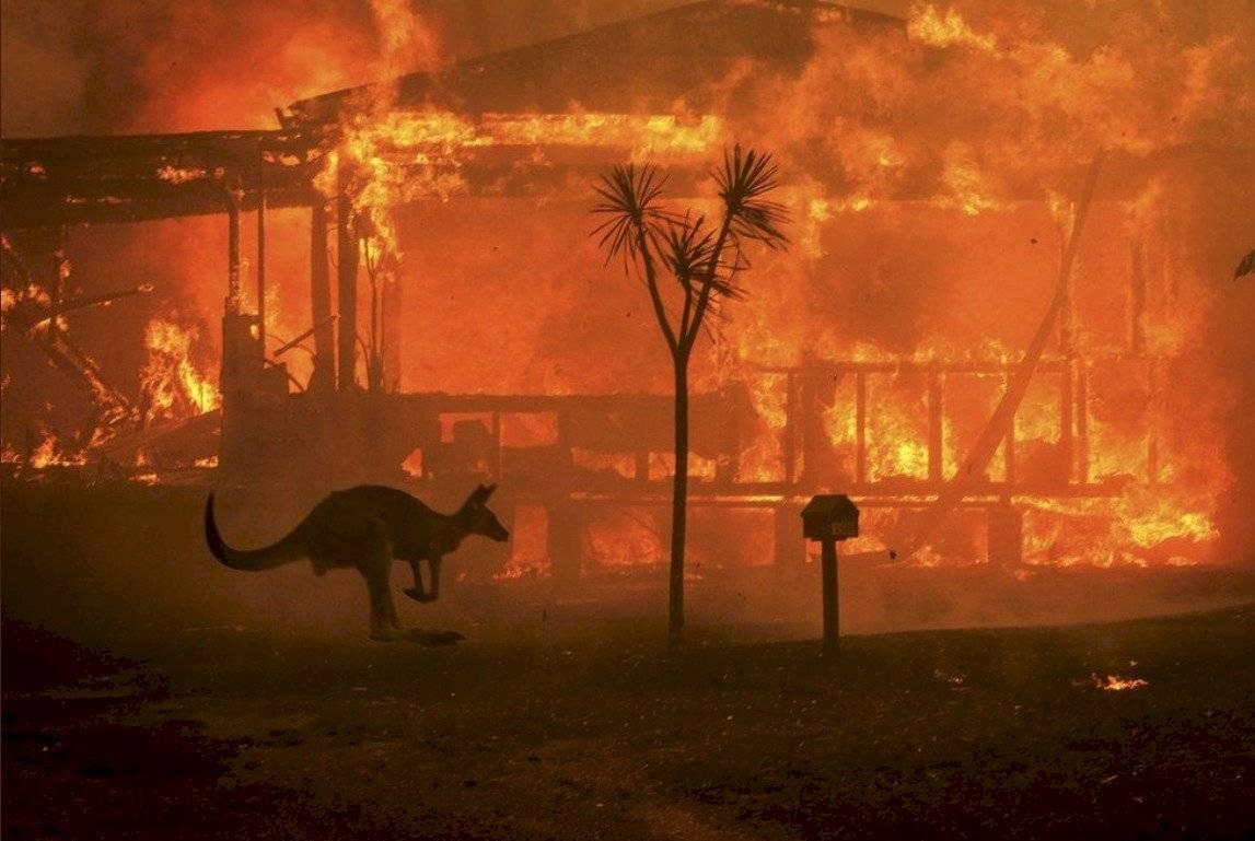 Canguro huyendo del incendio en Australia