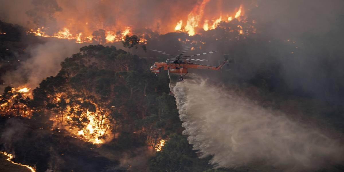 Casi 500 millones de animales han muerto por incendios en Australia