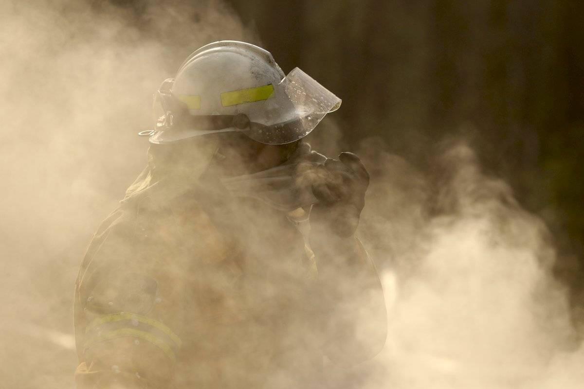 Unos 480 millones de animales víctimas de los incendios en Australia