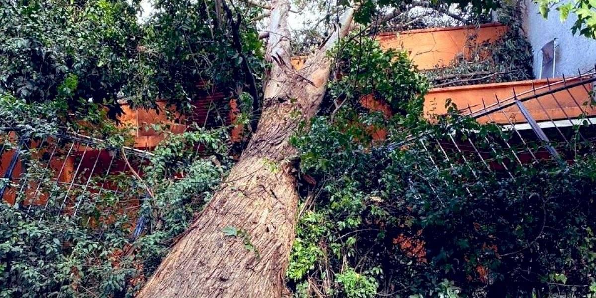 Vientos en CDMX causa derrumbe de 20 árboles en 10 alcaldías
