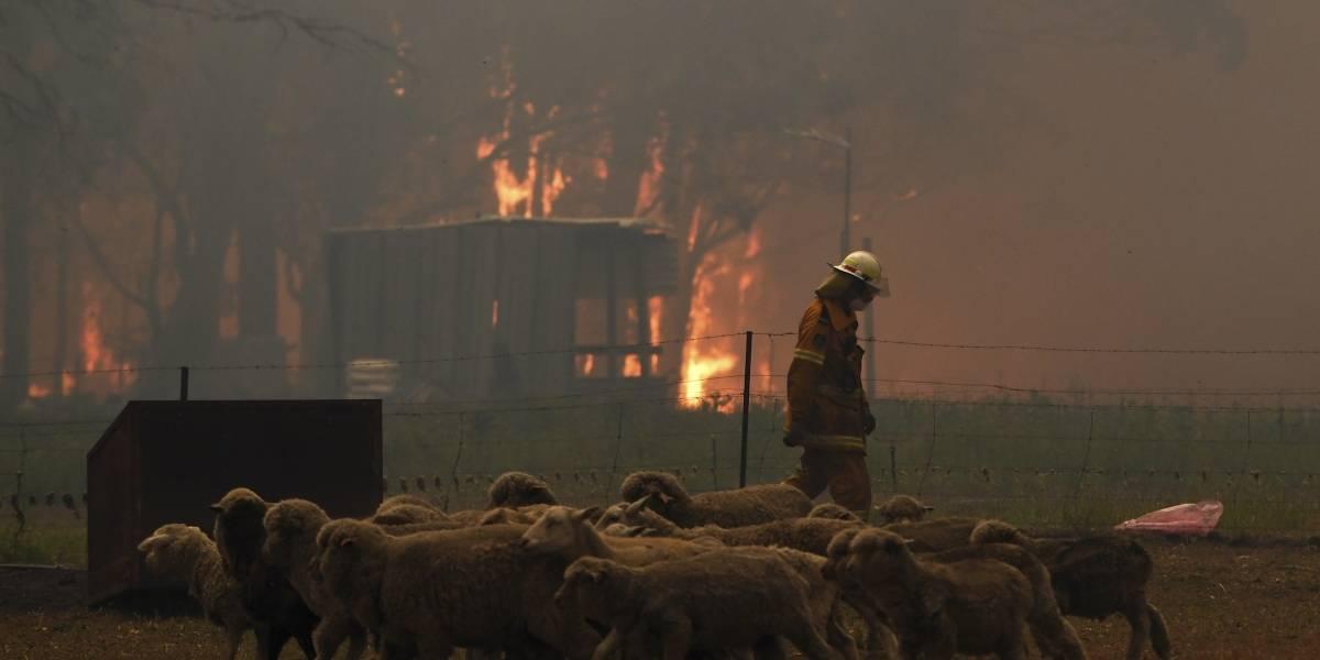 ¡Lamentable! Aproximadamente 480 millones de animales mueren durante incendios en Australia