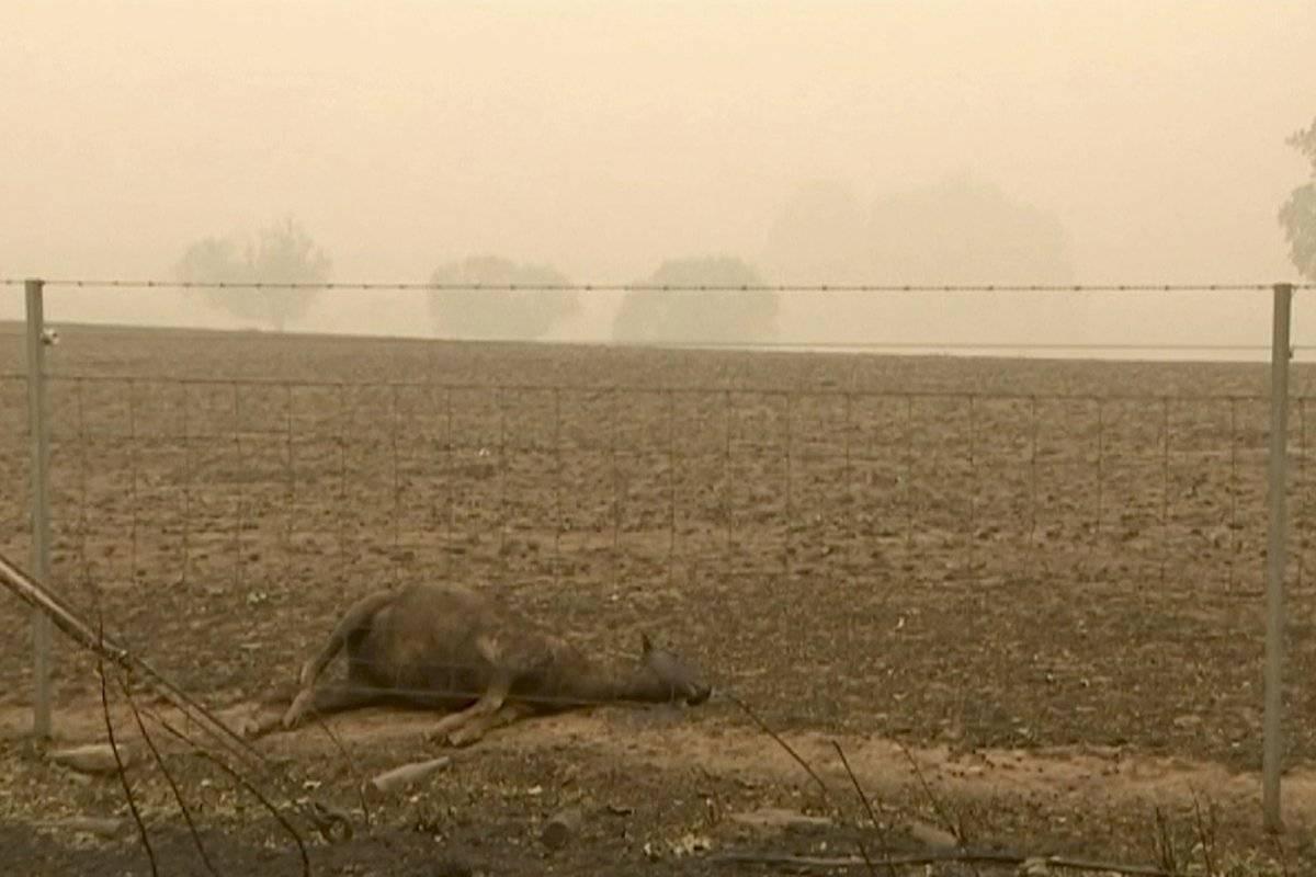 Animales fallecidos por los incendios