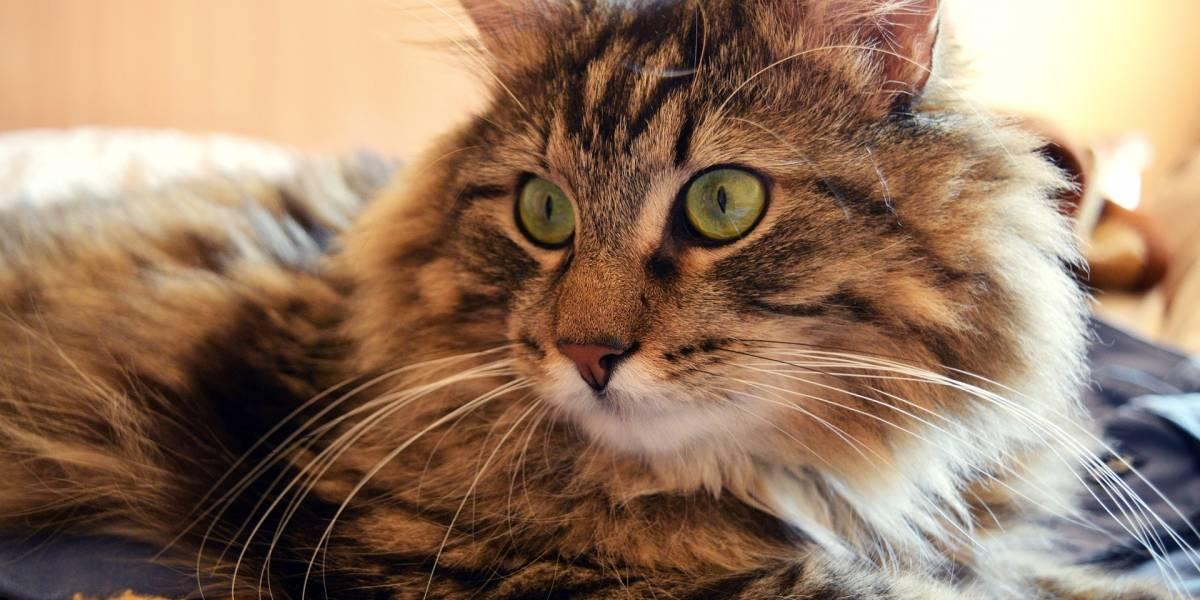 Antiga dona de gato processa mulher que o adotou por não deixar o animal dormir na cama