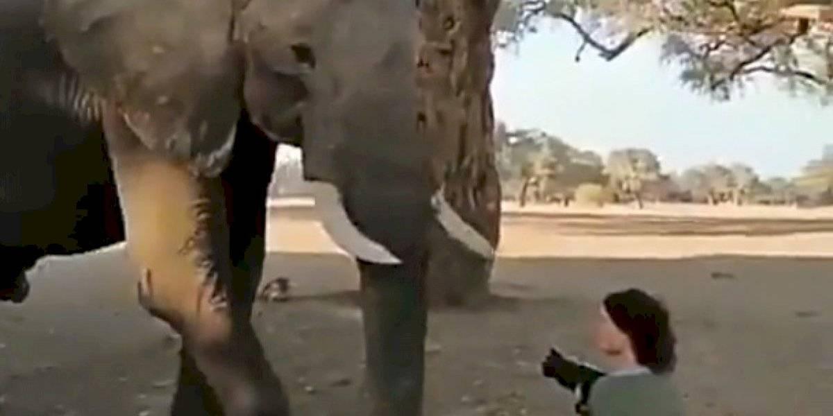VÍDEO: Elefante fica cara a cara com fotógrafa e defende seu espaço com gesto curioso