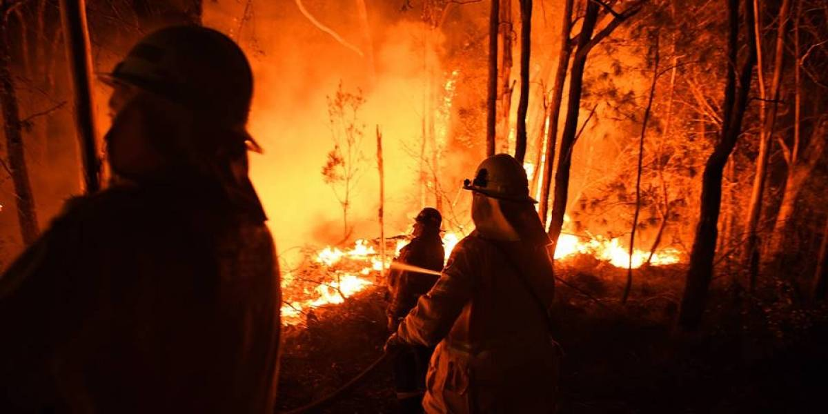 Mais de 500 milhões de animais morreram nos incêndios da Austrália