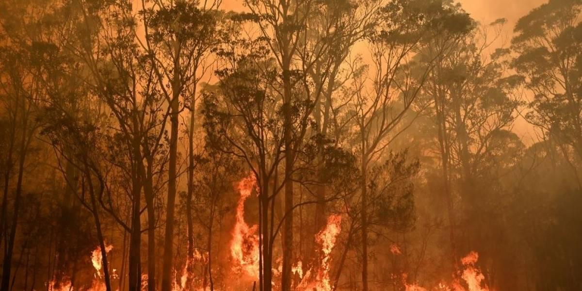 Australia: la razón tras la enorme cantidad de incendios que azota el país