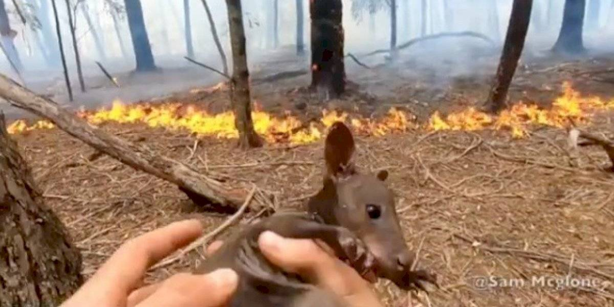 (Video) ¡Conmovedor! Bombero rescata a bebé canguro de las llamas en Australia