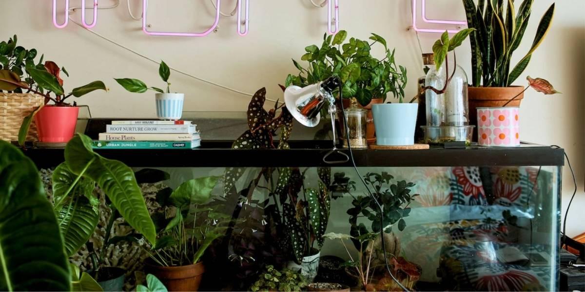 Como cuidar de plantas em um apartamento; veja 6 dicas