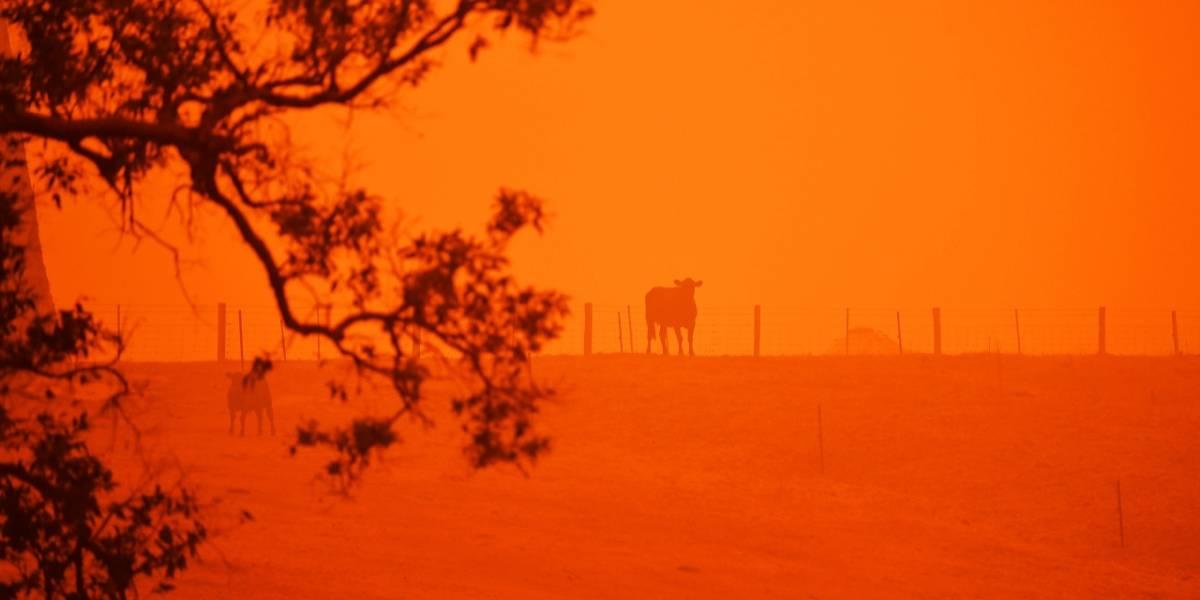 Australia: Se especulan más de mil millones de animales muertos por incendios
