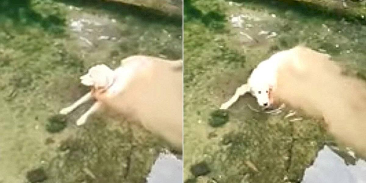 Vídeo de cachorro que parece desintegrar em rio faz sucesso nas redes sociais