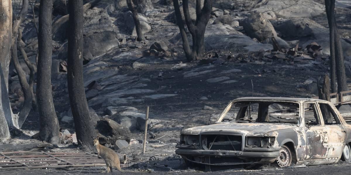 Incendios en Australia dejan mil millones de animales muertos y acercan a algunos a la extinción