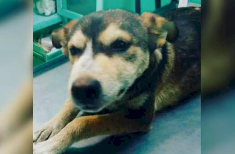 Una perrita de ocho meses murió al ser abusada por el cuidador de un autolavado