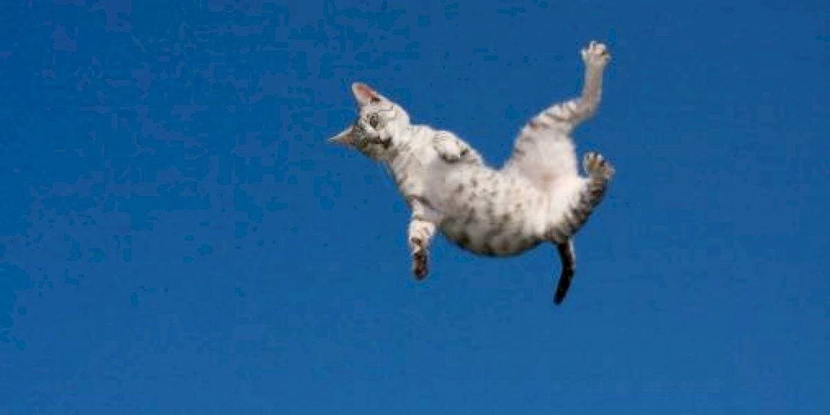 ¿Por qué los gatos siempre caen de pie? El misterio que todavía no logran resolver los científicos