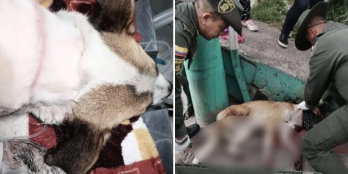 ¡Indignante! Desalmado ciudadano intentó degollar a perrita en Bogotá