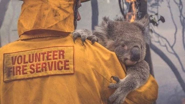 Australia: Tormentas extinguen incendios forestales de la parte este del país