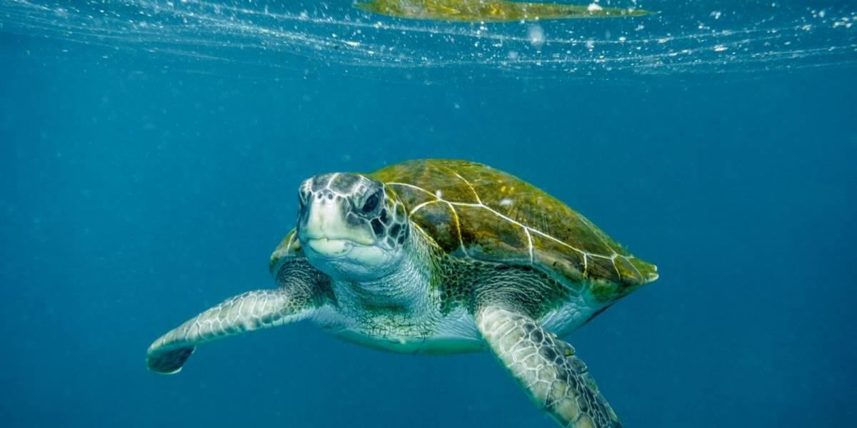 Ciencia: ¿cómo es el caparazón de una tortuga por dentro?