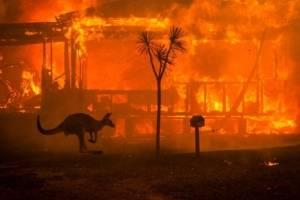 La historia detras de la foto de los incendios de Australia