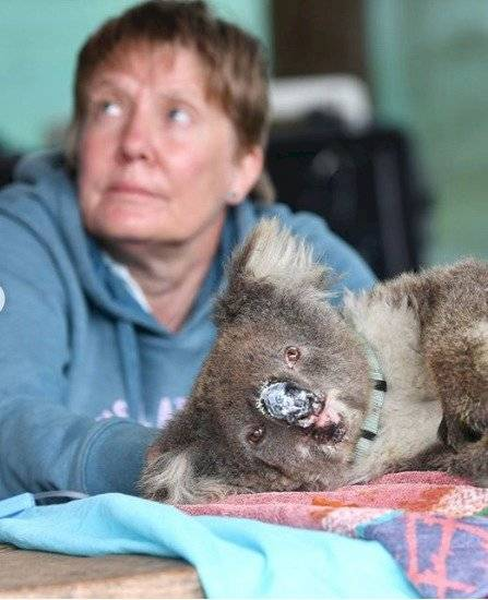 Debido al impactante número de perdidas de este tipo de animal, se lo ha declarado como funcionalmente extinto.