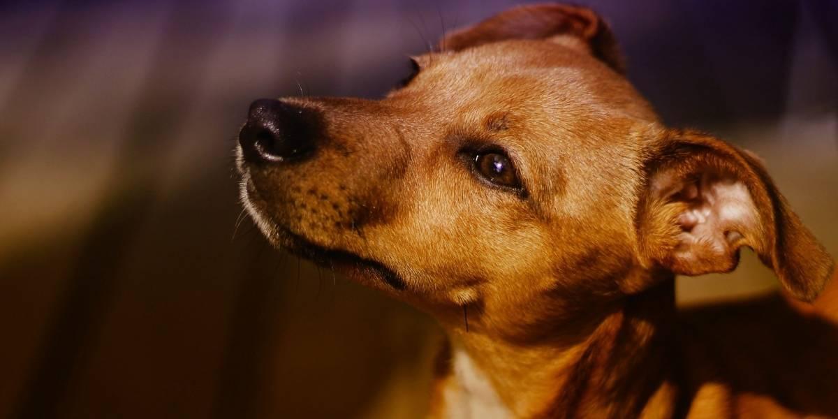 Brasil tem mais de 4 milhões de animais vivendo nas ruas, ONGs ou abrigos