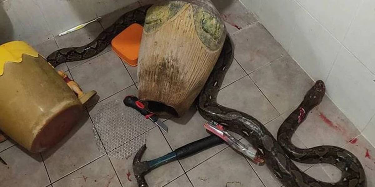 Mulher luta com cobra no banheiro e história se torna viral nas redes sociais