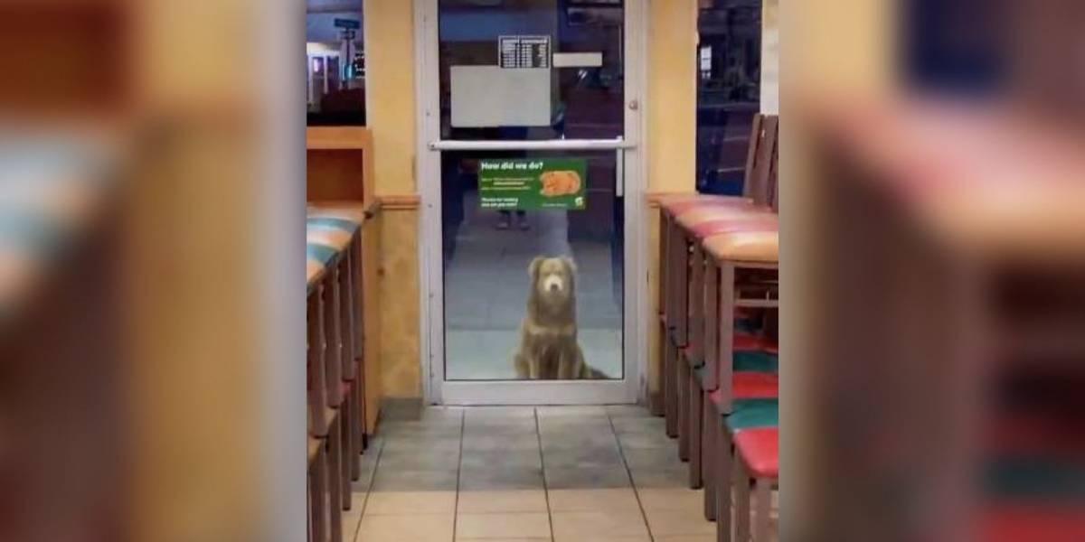 Vídeo mostra cadela de rua que visita lanchonete todos os dias para receber comida grátis
