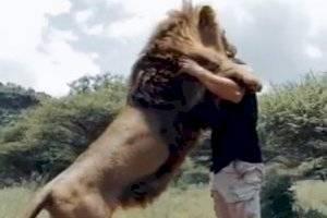 https://www.metrojornal.com.br/estilo-vida/2020/01/14/video-de-homem-abracando-e-beijando-leoes-se-torna-viral-nas-redes-sociais.html