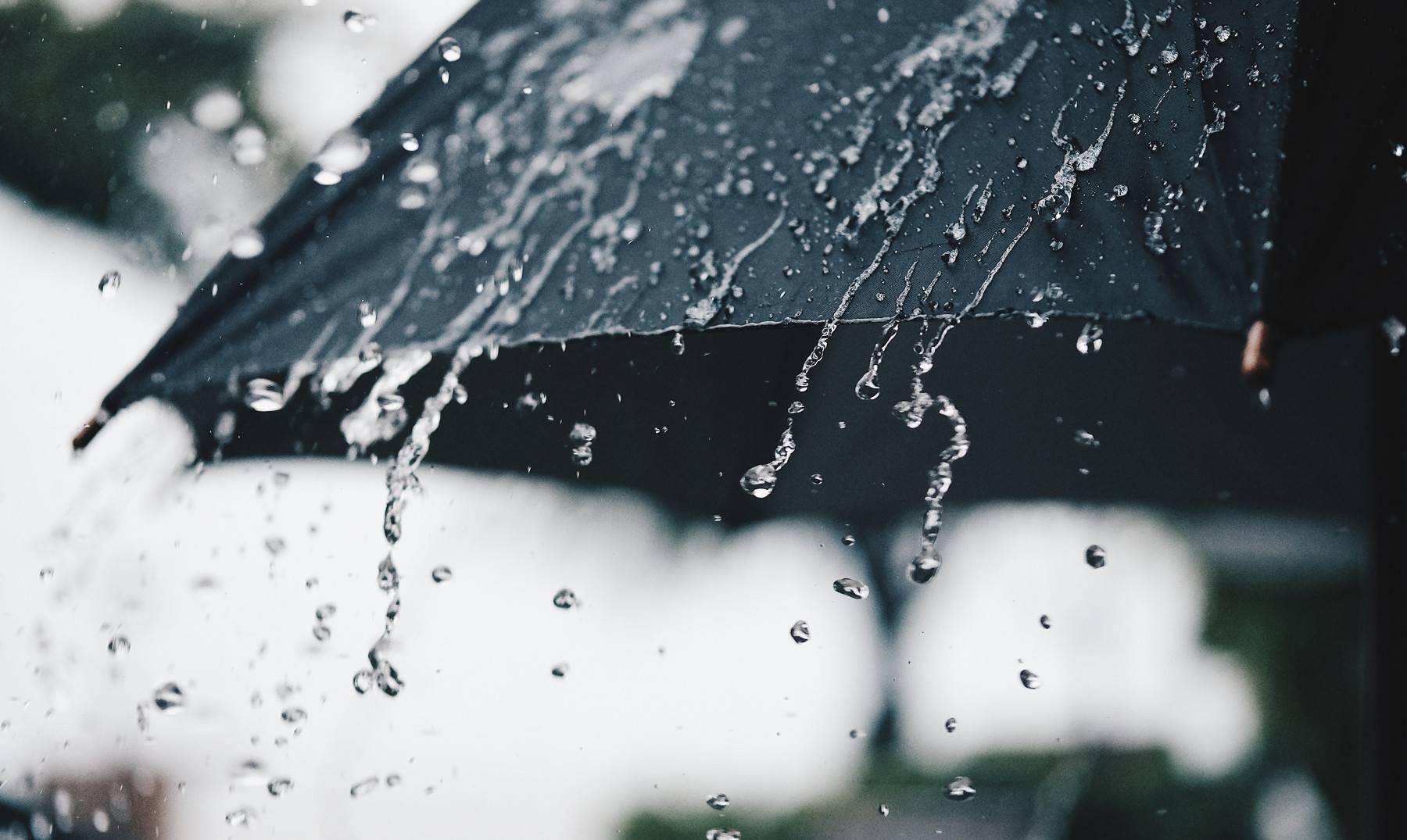 Sequía en Chile: científicos nacionales publican estudio que explica como planta en estas condiciones