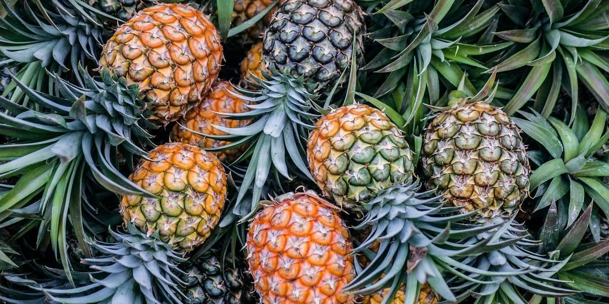 Como preparar chá de abacaxi para perder peso