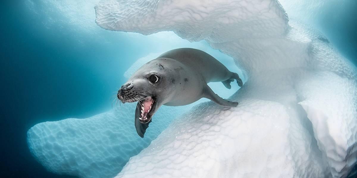Fotos do Concurso de Arte do Oceano mostram animais marinhos de todo o mundo