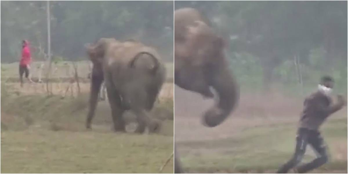 VÍDEO: Homem é perseguido por elefante após tentar tirar selfie com o animal