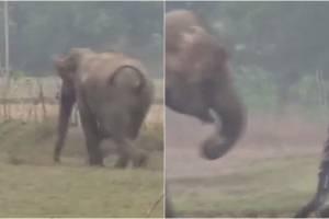 https://www.metrojornal.com.br/social/2020/01/16/homem-perseguido-elefante-tirar-selfie.html