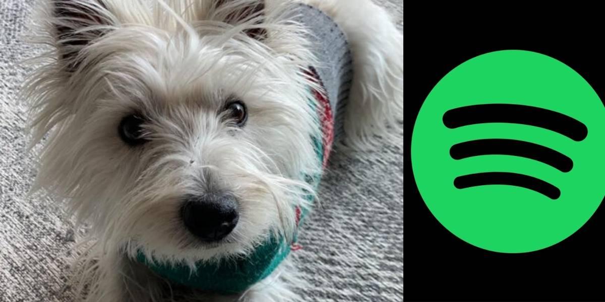 ¡Por fin! Spotify lanza playlist personalizada para mascotas