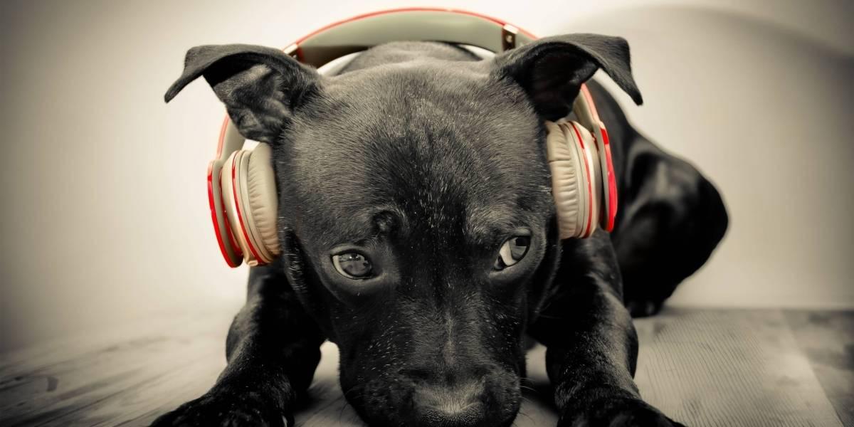 Las mascotas ya no se sentirán solas, Spotify lanzó una lista de reproducción para complacerlas