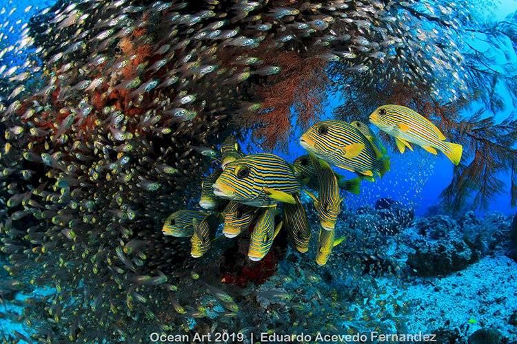 Ocean Art Underwater Photo Competition 2019